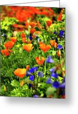 Arizona Wildflowers Greeting Card