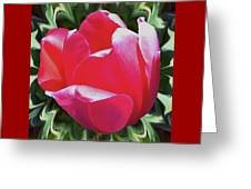 Arlington Tulip Greeting Card
