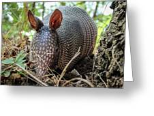 Armadillo In The Woods Greeting Card