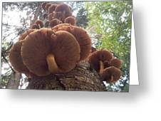 Armillaria Autumn On A Tree Trunk Greeting Card