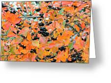 Aronia Greeting Card