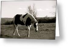 Around The Pasture Greeting Card by Debra     Vatalaro