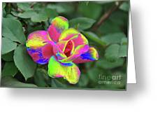 Array Of Color Greeting Card