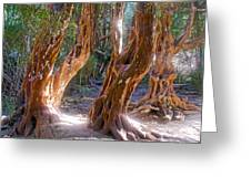 Arrayanes Grove On Trail In Arrayanes National Park Near Bariloche-argentina Greeting Card