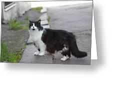 Arrogant Cat Greeting Card