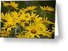 Arrowleaf Balsamroot Bouquet Greeting Card