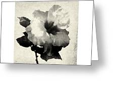 Art Is The Hibiscus -black And White Greeting Card