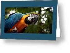 Art Macaw Greeting Card