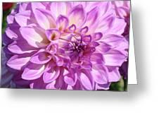 Art Prints Dahlia Flower Decorative Art Garden Baslee Greeting Card