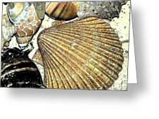 Art Shell 2 Greeting Card