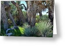 Arthur B Ripley Desert Woodland State Park Greeting Card