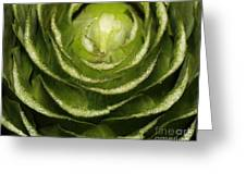 Artichoke Close-up Greeting Card