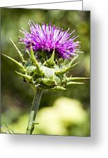 Artichoke Thistle 3 Greeting Card