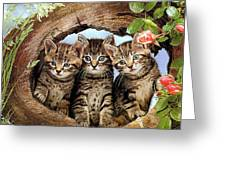 Three Cats Greeting Card