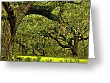 Artistic Live Oaks Greeting Card