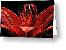 Artistic Red Pixie Asiatic Lily Greeting Card