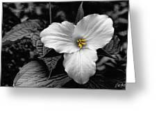 Artistic Trillium Greeting Card