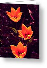 Artistic Tulips By Earl's Photography Greeting Card