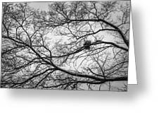 Snow On Bare Branches Greeting Card