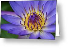 The Lotus Flower Greeting Card
