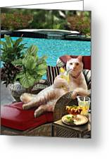 Funny Pet  Vacationing Kitty Greeting Card