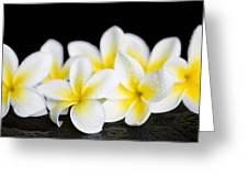 Plumeria Obtusa Singapore White Greeting Card