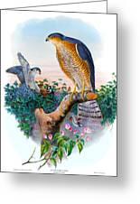 Sparrow Hawk Antique Bird Print Joseph Wolf Birds Of Great Britain  Greeting Card