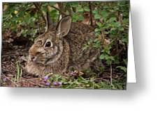 A Very Fine Bunny Resting Under The Lilac Bush Greeting Card