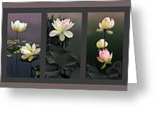 Lotus Collection II Greeting Card