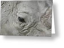 Rhino Eye Greeting Card