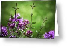 Lilac Memories Greeting Card