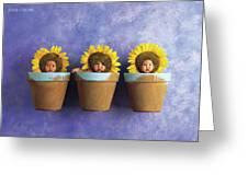 Sunflower Pots Greeting Card by Anne Geddes