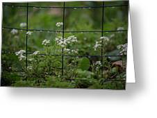 Raindrops On The Garden Fence Greeting Card