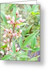Pale Powder Pink Plant Greeting Card