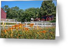 Daylilies And Oxen Wagon Greeting Card