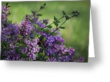 Lilac Enchantment Greeting Card