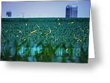 1306 - Fireflies - Lightning Bugs Over Corn Greeting Card