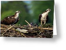 Osprey Family Night Greeting Card
