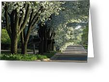 Shady Grove Greeting Card