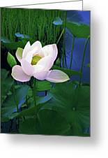 Midnight Lotus Greeting Card