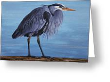 Great Blue Heron Greeting Card by Crista Forest