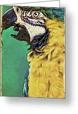 Aruba Yellow Greeting Card