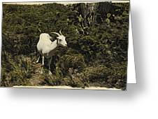 Arubagoat Greeting Card