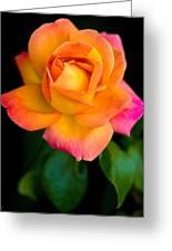 Arundel Rose Greeting Card
