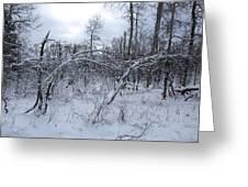 As Winter Returns Greeting Card