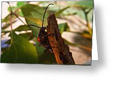 Asending Beetle Greeting Card