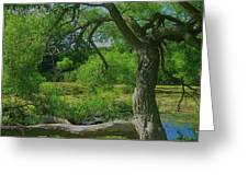 Ash Tree Greeting Card