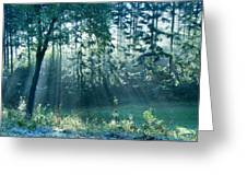 Ashenvale Forest Greeting Card