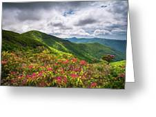 Asheville Nc Blue Ridge Parkway Spring Flowers North Carolina Greeting Card
