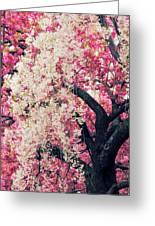 Asian Cherry Vignette Greeting Card